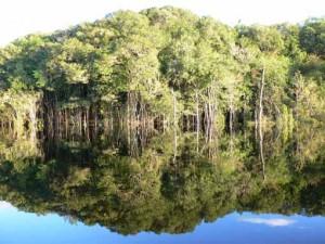 Foto: Floresta Amazônica - Matueté