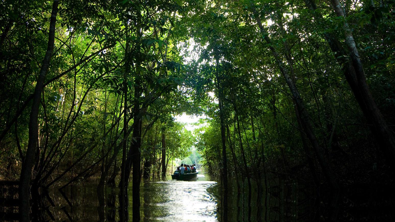 Brazil Amazon Boat Tours