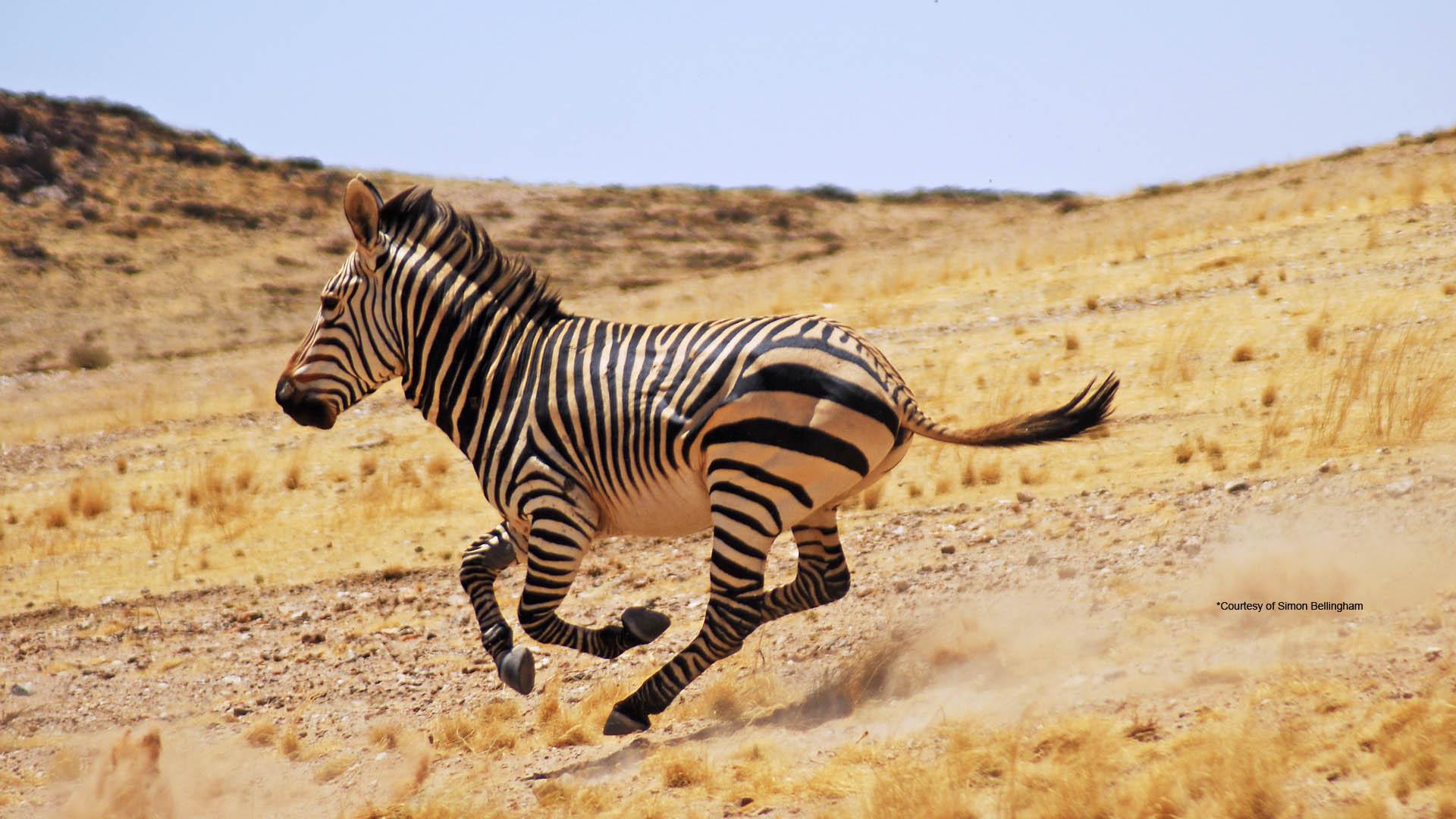 Skeleton Coast Namibia >> Namíbia - Matueté