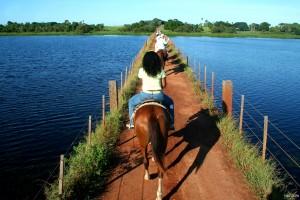 ZP -  Horseback Ride tour - Passeio a cavalo
