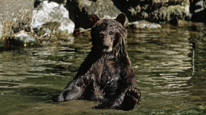 bears-1-15 copy 3