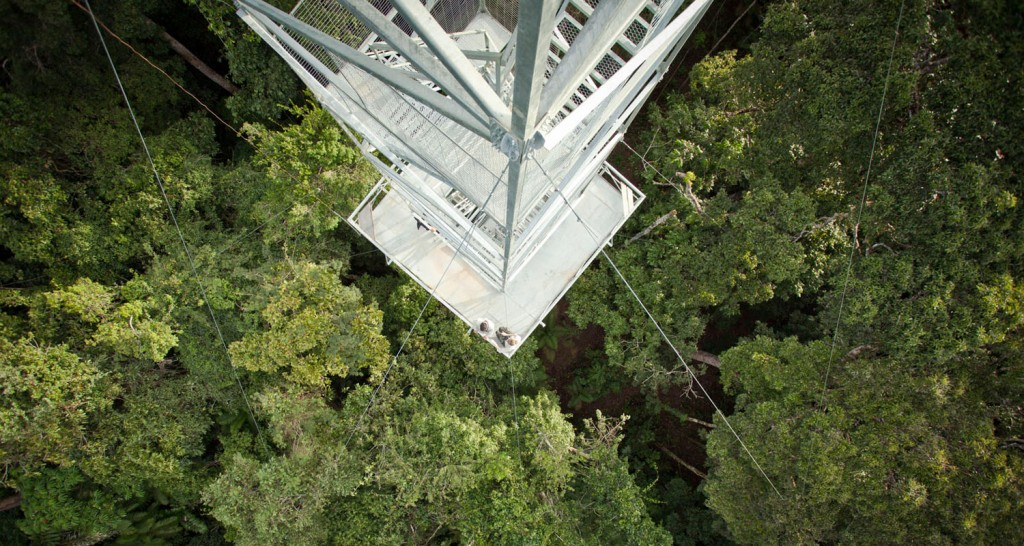 Canopy tower from above II
